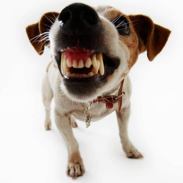Dog (teeth close up)