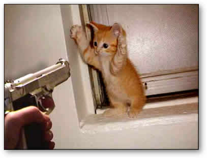 Gunpoint (cat)