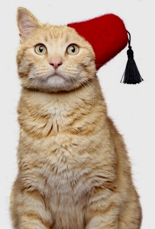 Fez 03 (cat) (1)